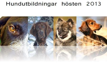 Hundutbildningar-2013