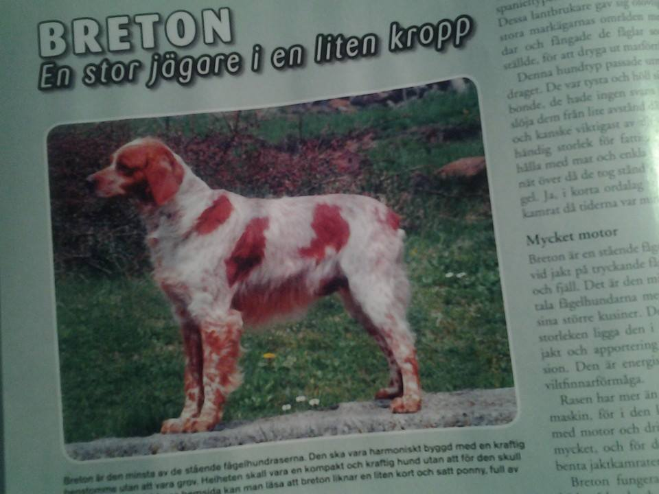 breton-hundsport